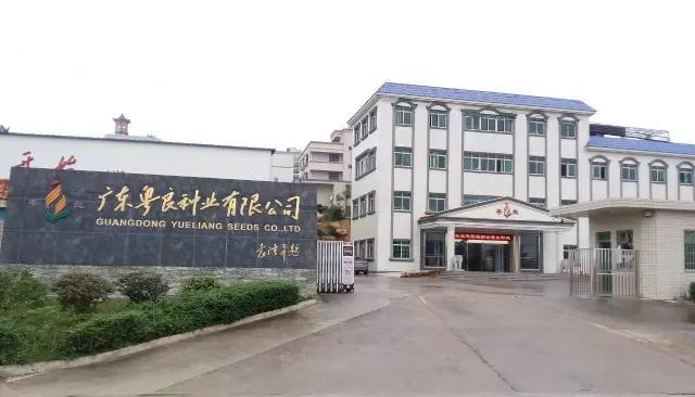 刘康平:面向目标市场定向选育最适合的水稻品种